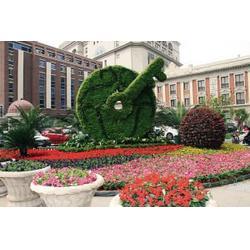 国庆绿化草花、山一花卉苗木、扬州国庆绿化草花图片