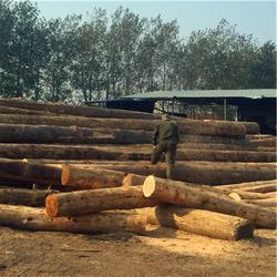 日照中林木材(多图)|烘干家具板材|聊城烘干家具板材图片