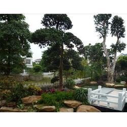 园林设计案例,广州园林设计,陈拾园林图片