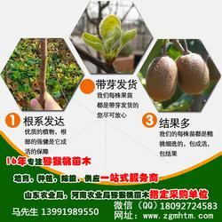 红心猕猴桃苗 猕猴桃树苗(在线咨询) 眉县猕猴桃苗图片