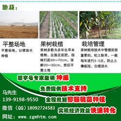 杨凌猕猴桃苗,猕猴桃苗种植,猕猴桃树苗(推荐商家)