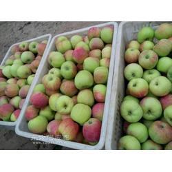 早熟藤木一 辽伏苹果上市图片