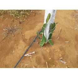 广西果树灌溉、果树灌溉哪家好、格莱欧(优质商家)图片