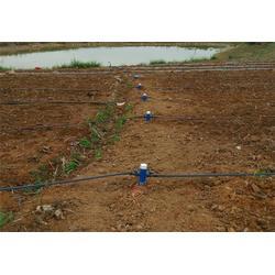 草莓滴灌设备,格莱欧(在线咨询),南宁草莓滴灌图片