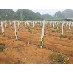 灌溉带、南宁灌溉带、格莱欧节水设备(查看)图片