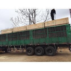 铁杉方木销售厂家_铁杉方木_贝特建筑木方(图)图片
