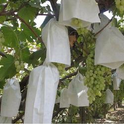 汤阴育果袋纸、光大纸业、育果袋纸生产厂家图片
