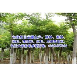 楚雄水杉、旭日苗圃、4公分水杉图片