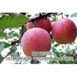 苹果苗、森林园艺场、苹果苗销售图片