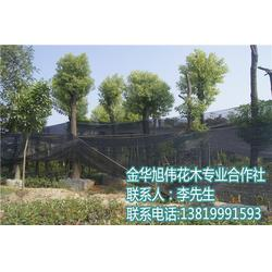 容器苗种植-贵州容器苗-旭伟花木值得推荐(查看)图片