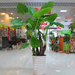 武汉绿植植物-雅淳花卉图片