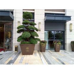 """武汉酒店绿植租摆""""本信息长期有效""""图片"""