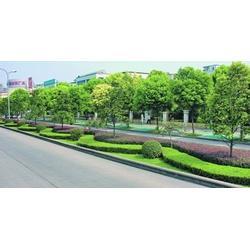 武汉企业绿化报价 武汉雅淳花卉