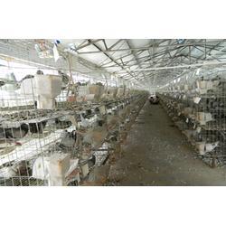 山东中鹏农牧,山西种鸽,怎样留种鸽图片