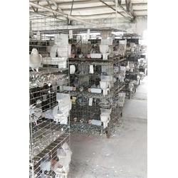 甘肃种鸽,种鸽养殖,山东中鹏农牧图片