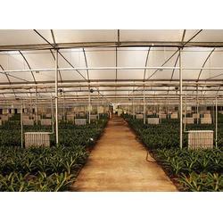 合肥建野大棚(图)_阳光板温室大棚公司_安徽阳光板温室图片