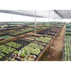 福贡农业大棚厂家-科创温室大棚-福贡农业大棚图片
