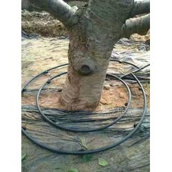 陽谷縣果樹滴灌管材安裝設計大棚滴灌管材廠家直銷圖片
