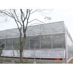 文洛型阳光板温室厂家图片