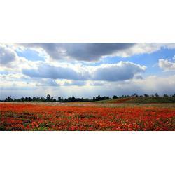 景谷组合花种-组合花种售价-二月蓝农业图片