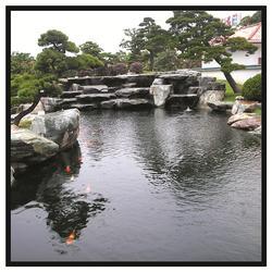 鱼池-鲤鱼池-杭州华池园林(优质商家)