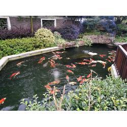 龙栖源生态水|杭州华池园林|龙栖源生态水图片
