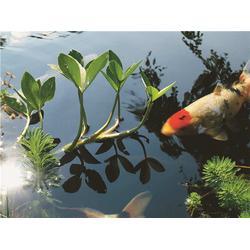 景观水过滤系统-绍兴景观水过滤-杭州华池园林(查看)图片