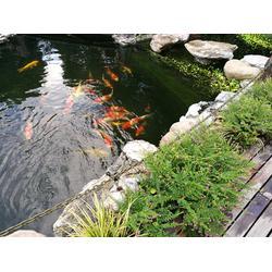 菏泽鱼池净化-杭州华池园林-鱼池净化原理图片