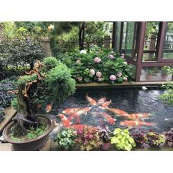 什么东西能让水质变坏-杭州华池园林-水质变坏图片