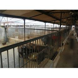 野猪猪仔_格六牧业(在线咨询)_济南野猪仔图片