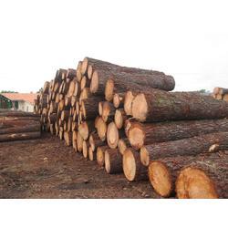 木材加工供应商,木材加工,旺鑫木业-木材加工(查看)图片