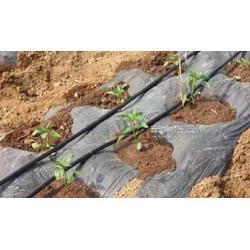 大田滴灌设备农田灌溉管材优质PE管件滴灌管材图片