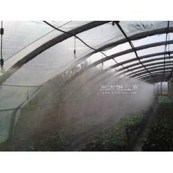 西葫芦种植灌溉管农田滴灌管大棚滴灌带图片