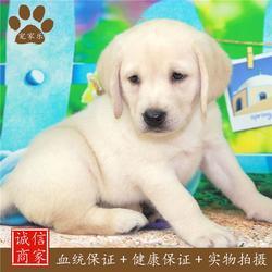 宠物|宠家乐宠物医疗|宠物幼犬图片