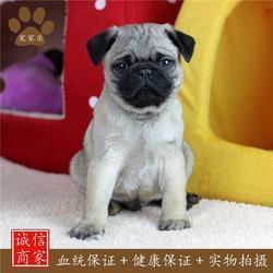 宠物-成都宠家乐宠物用品-宠物领养图片