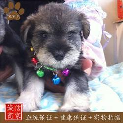 宠物寄养、宠物、宠家乐宠物美容(查看)图片