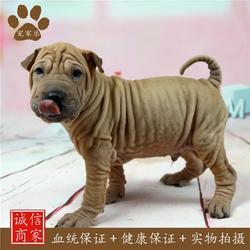 宠物医疗,沙皮,宠家乐宠物用品图片