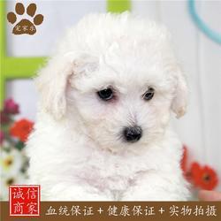 宠家乐-宠物-宠家乐宠物美容图片