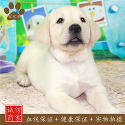 宠物狗|宠物|宠家乐宠物用品(查看)图片