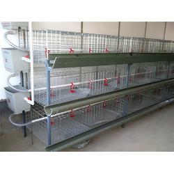 安徽鸡笼子_恒源农牧机械_母鸡笼子图片