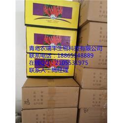 玉溪辣椒种子_英潮红4号_山东辣椒种子图片
