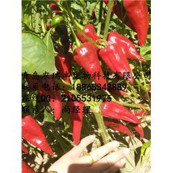 农瑞丰(图)、哪里有卖国鑫辣椒种子的、遂宁辣椒种子图片