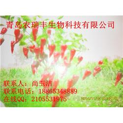 农瑞丰(图)、北京红辣椒收购商、潍坊北京红辣椒图片