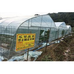 双桥冬草莓采摘,楠之林雪生态农业园 ,冬草莓采摘哪家便宜图片