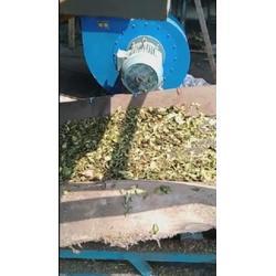 吉林银杏叶烘干机、金茂机械、银杏叶烘干机干燥速度图片