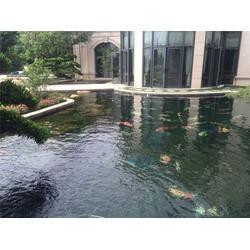 茂名花园鱼池,屋顶花园鱼池设计,金碧林图片