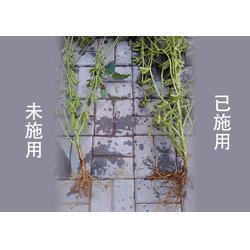 化肥增效剂厂家_通化化肥增效剂_添丰宝【诚信】图片