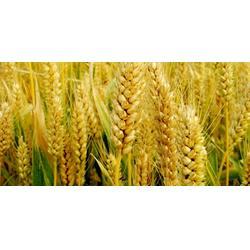 粮食增产增收哪家好-添丰宝【服务至上】-讷河市粮食增产增收图片