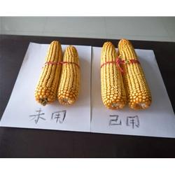 添丰宝(质优价廉) 粮食增产增收-阜新粮食增产增收图片