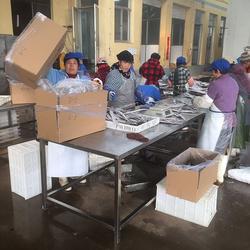 帶魚銷售-萬盛食品公司-帶魚圖片